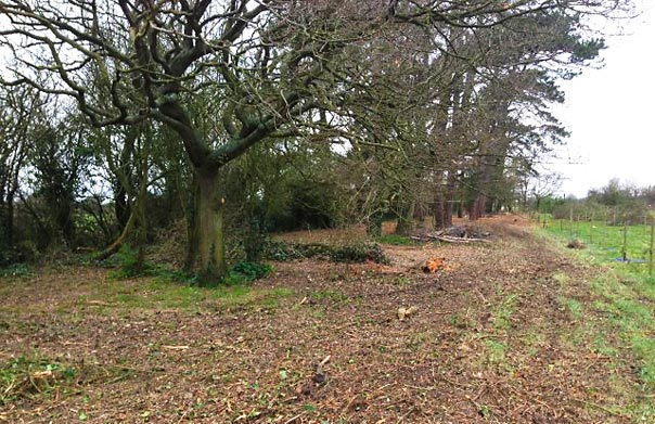 Cleared ground after brush cutting works